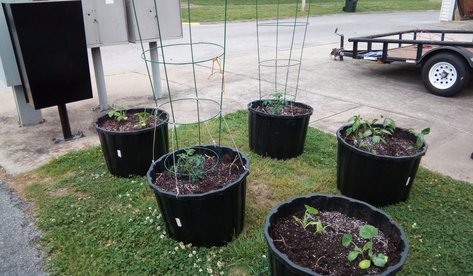Five black plastic tubs with garden plants growing for a container gardening project